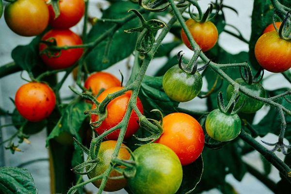 Empresas hortofrutícolas