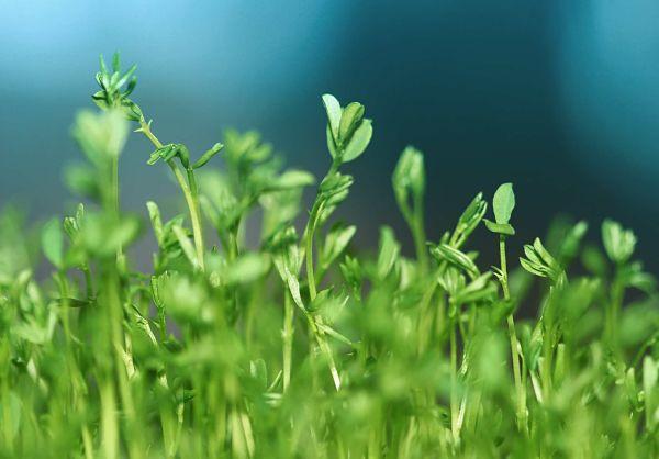 Promoción horticultura