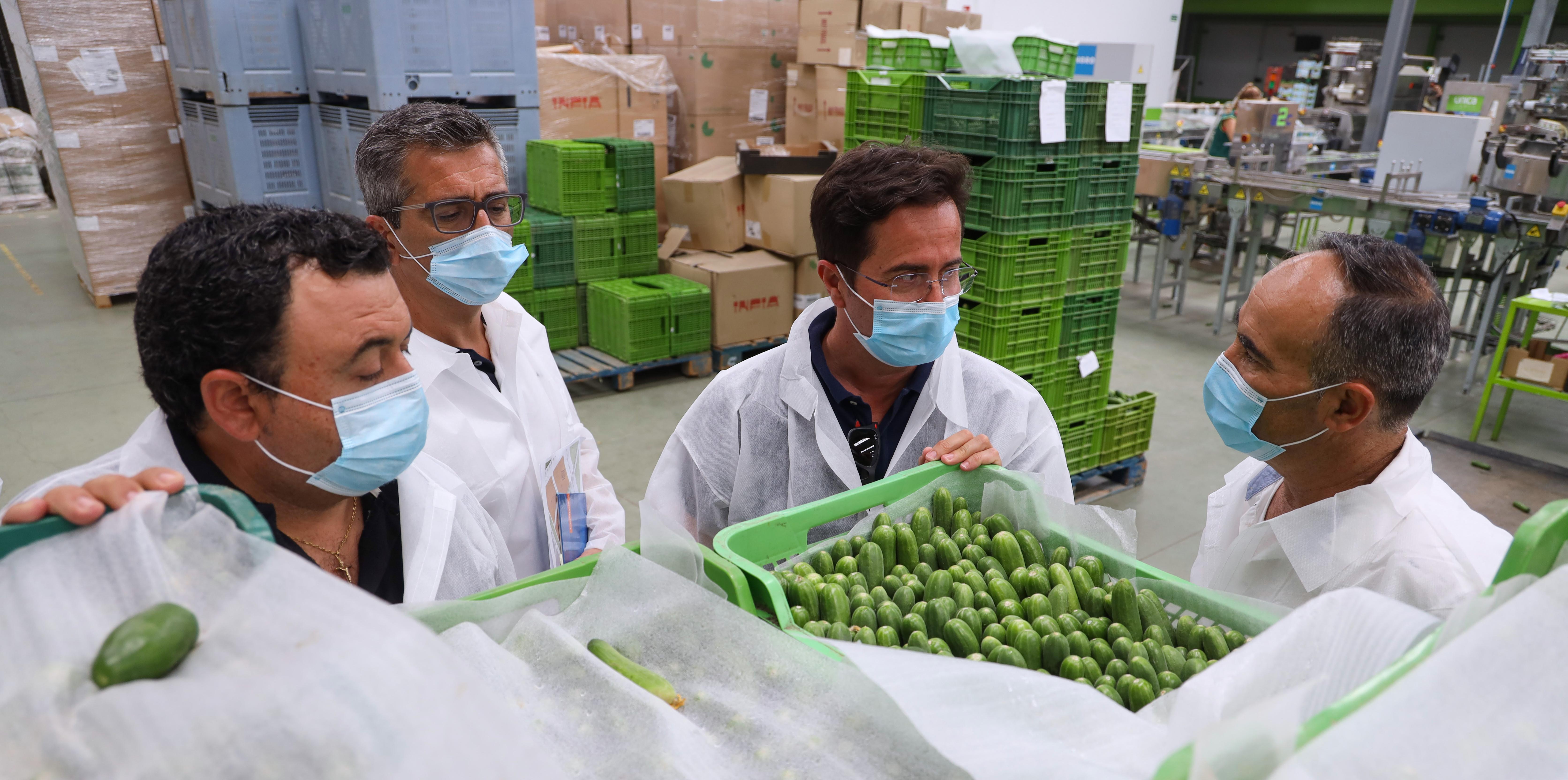 Visita a las instalaciones de la cooperativa Cohorsan, para conocer la nueva variedad de calabacín 'CRü'